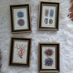 Other - 4 coral / sea life prints wall art decor
